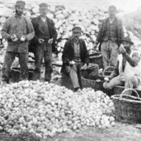 Farallon Egg Collectors Photo